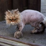Mystery Cat Shaver Operating in Southport, Warn Police